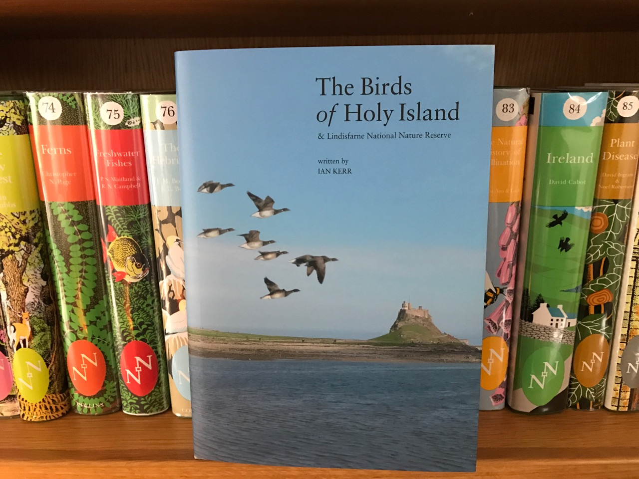 Book Review - The Birds of Holy Island