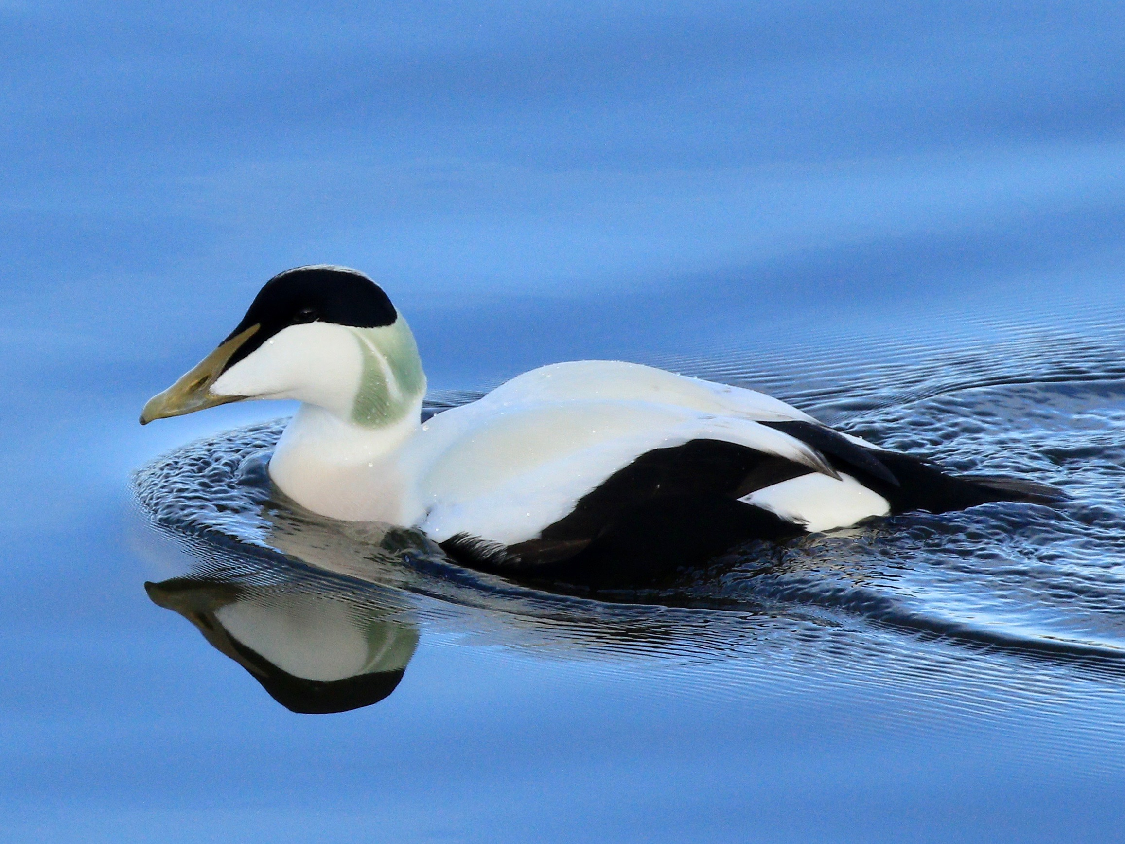 Eider Aware North East